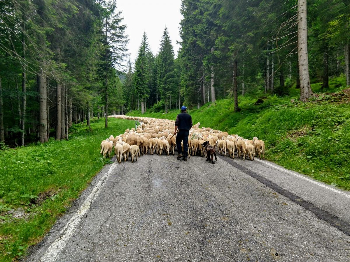 Straßen-Blockade...